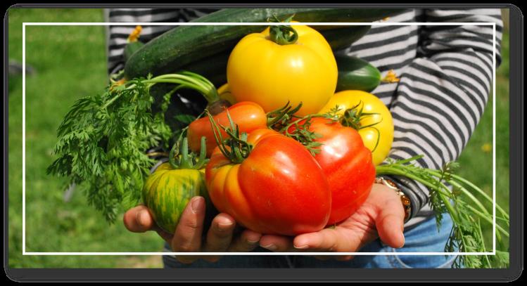 cueillette fruits légumes bio jardin